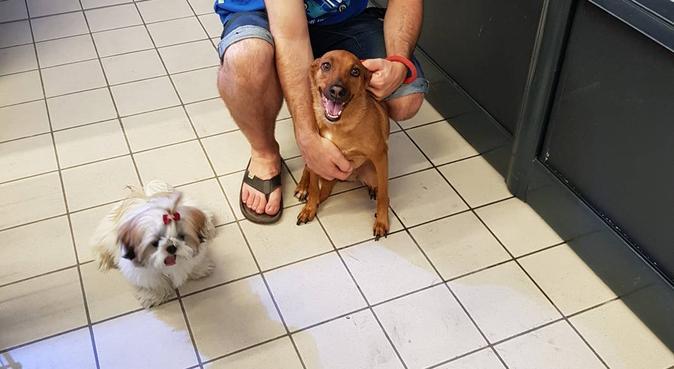 Trabajo desde casa, el perrito estará acompañado, canguro en Vitoria