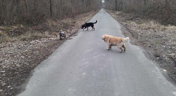 Longues ballades en foret, dog sitter à Savigny-sur-Orge, France