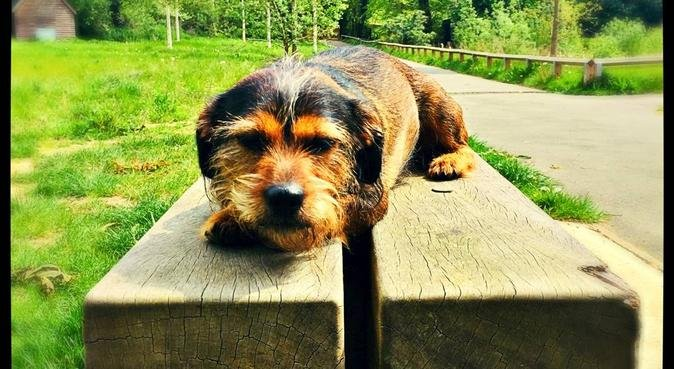 Your dogs happiness is my happiness!, dog sitter in Middlesex