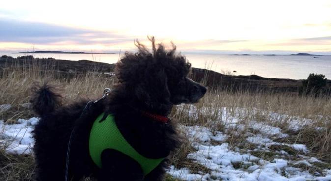 På tur er det aldri dårlig vær, bare dårlige klær!, hundepassere i Tananger