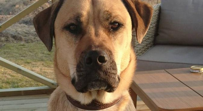 Kärleksfull hundpassare, hundvakt nära Östersund