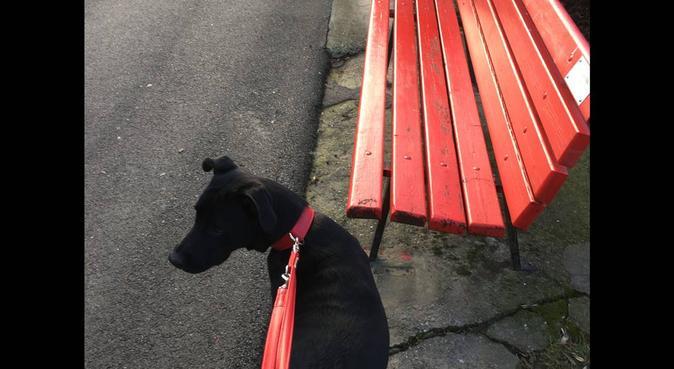 Qua la zampa! Passeggiate e servizio a domicilio, dog sitter a Bergamo