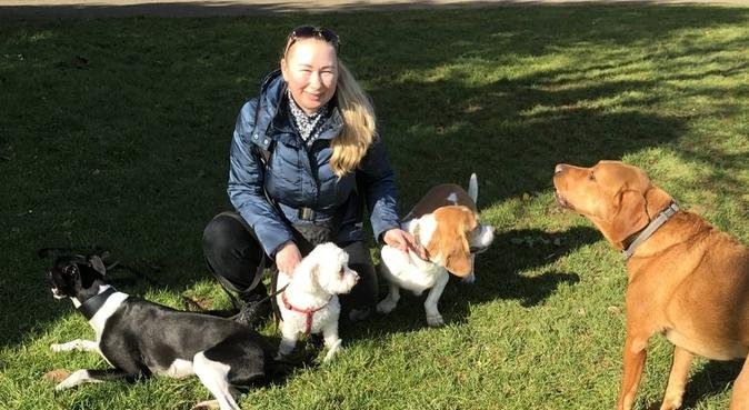 🐾 Dog Walker in Hove/best friend is dog 🐾, dog sitter in Hove