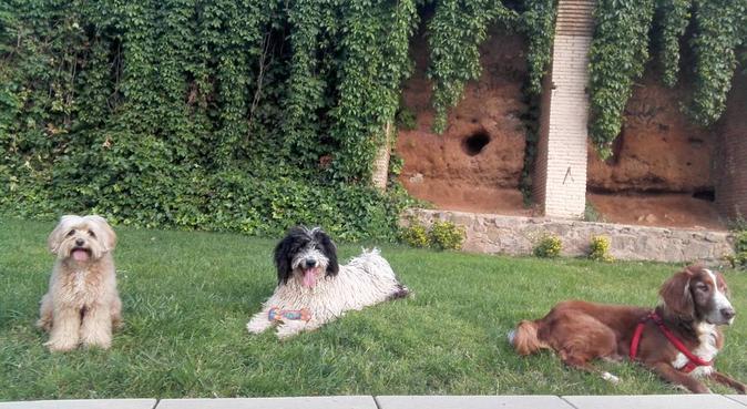 Con un perro al fìn del mundo..., canguro en Barcelona