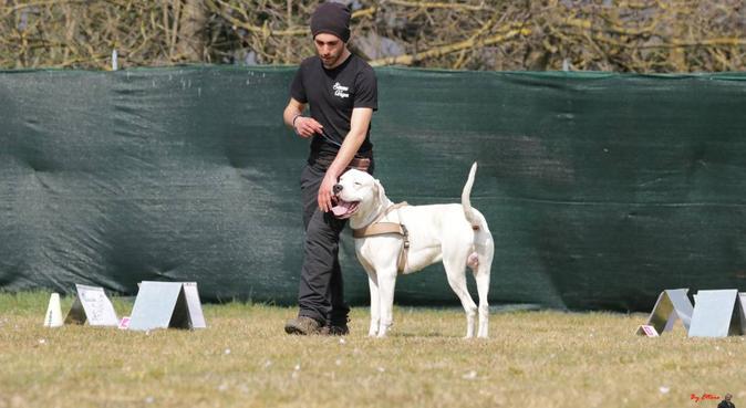 Un cane che viene ascoltato è un cane felice, dog sitter a Frascati