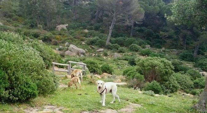 !!!🐕BIENVENIDO A TU CASA🐇!!!, dog sitter in Algeciras