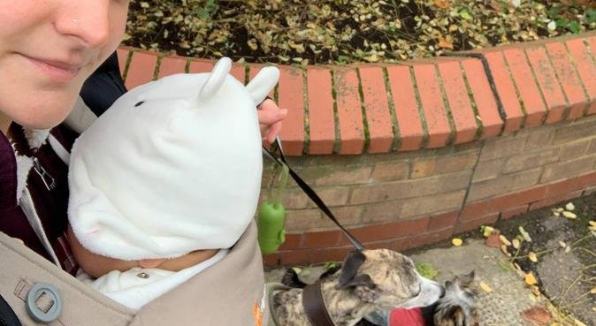 Fun and cuddles in Bermondsey, dog sitter in Rotherhithe