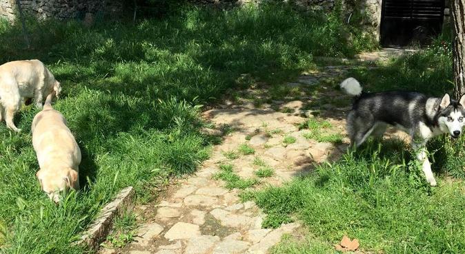 Vacaciones en la sierra para tu mascota!!, canguro en guadarrama
