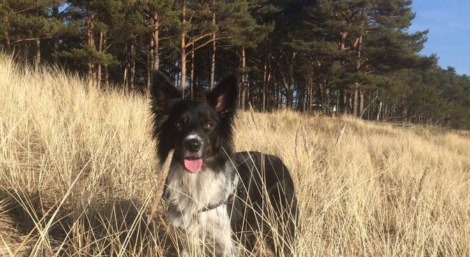 Mye kjærlighet og positiv trening, hundepassere i Vollen, Norge