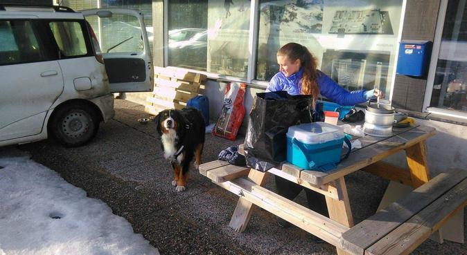 Voksen,omsorgsfull 🐕passer i Årstad., hundepassere i Bergen