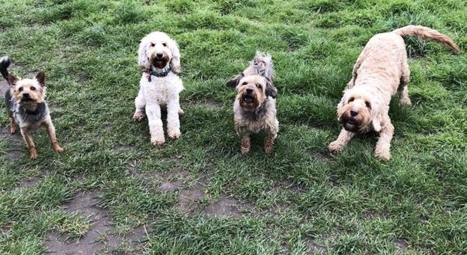Wimbledon Dog Care & Grooming, dog sitter in London, UK
