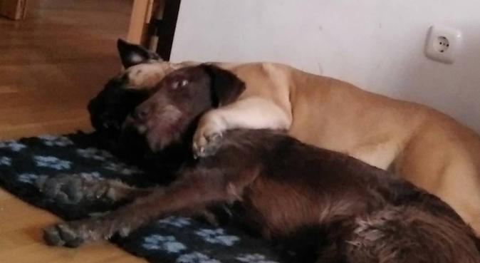 Perritos felices, queridos y bien cuidados, canguro en Arroyo de la Encomienda