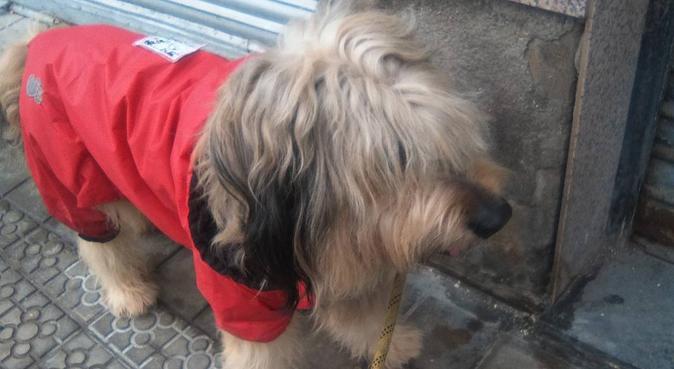Tu mejor amigo es mi mejor amigo!, canguro en Bilbao