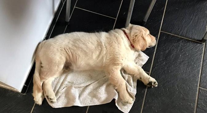 Go pour une promenade funny, dog sitter à Avrillé