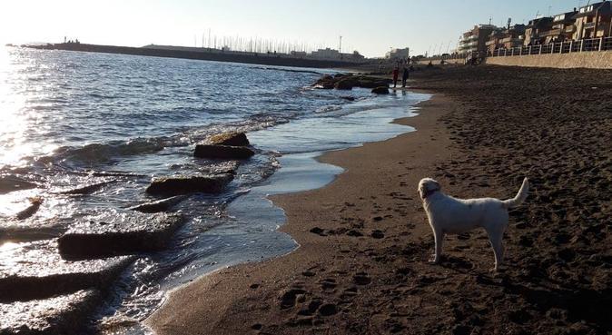UN AMORE DI CASA A 4 ZAMPE❤, dog sitter a Roma