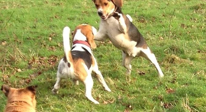 We must be Barking!  All dogs welcome, dog sitter in London