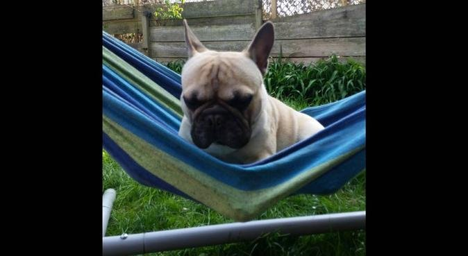 Doggy/animal carer with a diploma with a good home, dog sitter in Newport
