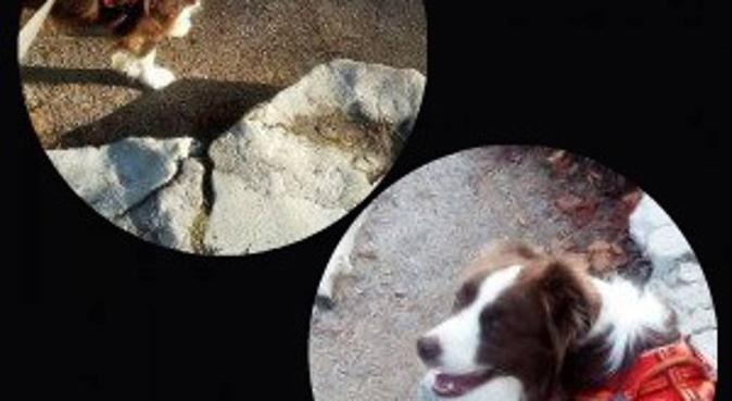 Balade Jeux Et Calins à Croix, dog sitter à Croix