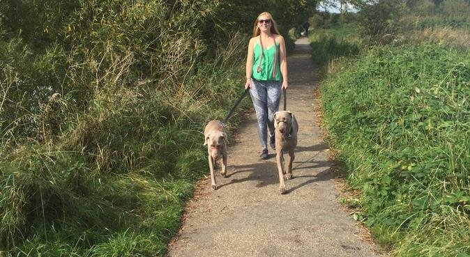 Pawtastic Holidays, dog sitter in Hereford