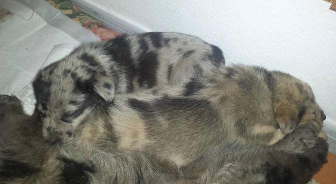 El paraíso para tus perros está a un paso de León, canguro en Benamariel