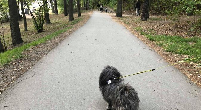 Student og hund søker firbente venner, hundepassere i Stavanger, Norway