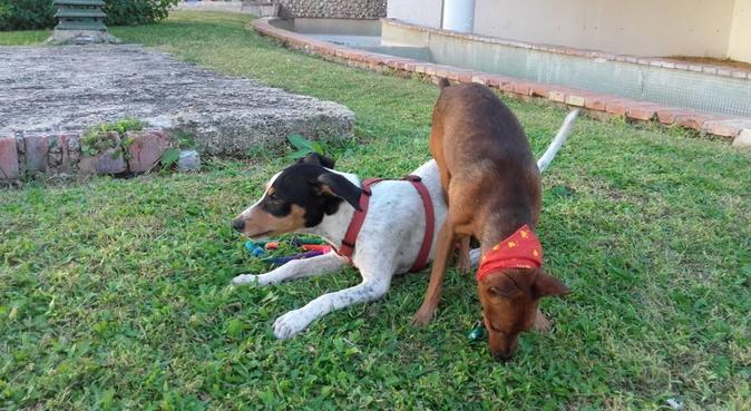 ¡Utopía canina!, canguro en Jaén Capital