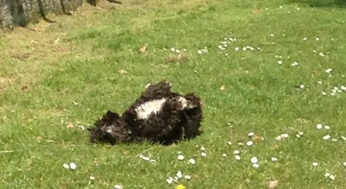 Loving home for cuddling,fluffy dog, dog sitter in London, UK
