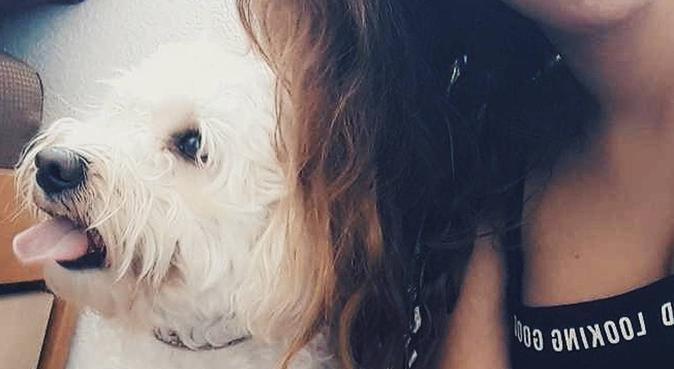 Nos amis les animaux, dog sitter à Pau
