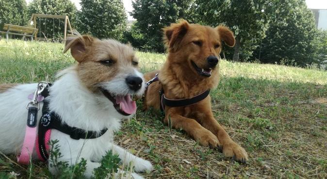 Affetto, calore e tante coccole in mia compagnia, dog sitter a Desio