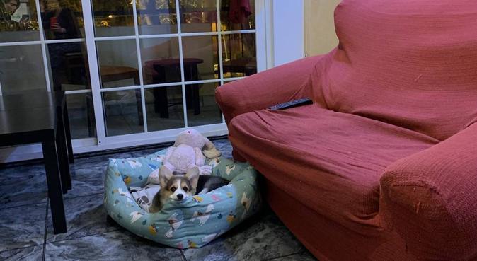 El paraíso de las mascotas 💕 Vacaciones perrunas., canguro en Barcelona, España