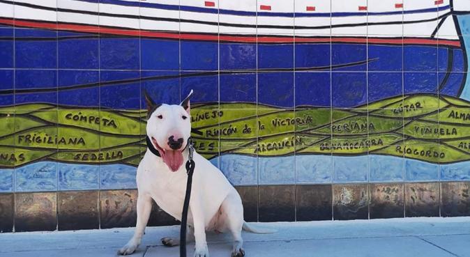 Cuidadora de perros, trato familiar., Hundesitter in Torre Del Mar