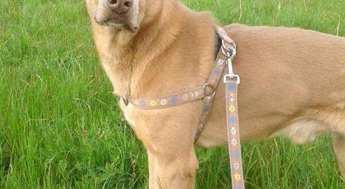 Quando il padrone non c'è i cani ballano 😎💕🐾, dog sitter a Bologna, BO, Italia