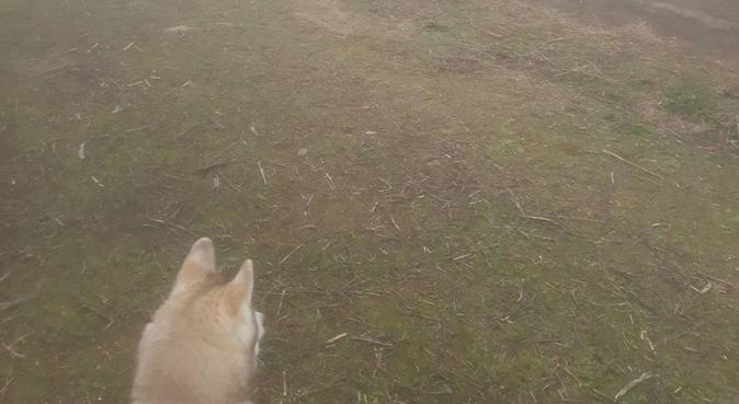 Familia petsitters 24/7, canguro en Pinto