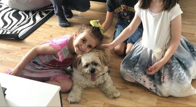 Dog paradise, love, safe and cuddles!!, dog sitter in London, UK