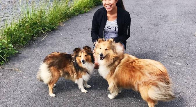 Härlig hundpassning mitt i Knivsta, hundvakt nära Knivsta, Sverige