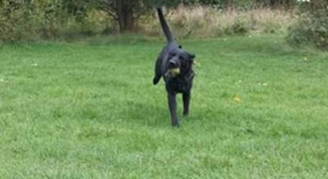 Let's go walkies, dog sitter in Kingsthorpe