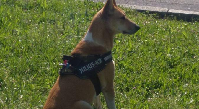 TU SEGUNDA 🏠. Con título Canino., canguro en Bilbao