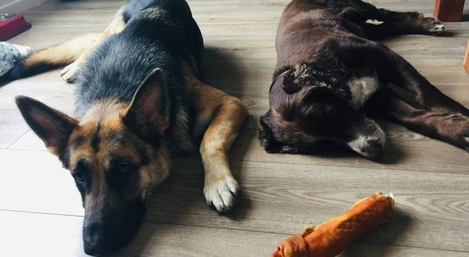 Kat and Agi friends with Dogs, dog sitter in Wirral