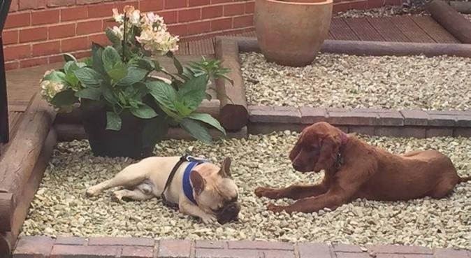 Leaving your furry ones in loving hands, dog sitter in Worcester