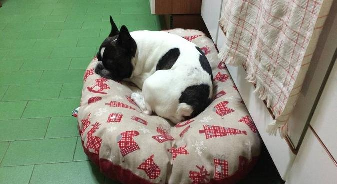 Studente di Veterinaria innamorato degli animali!!, dog sitter a Perugia
