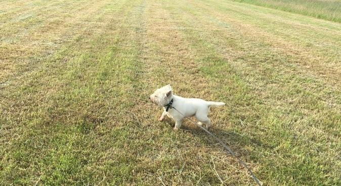 Go out and enjoy your evenings and weekends!, dog sitter in Denham