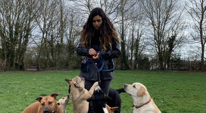 Lovely home enviroment for your dog!, dog sitter in Londres