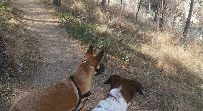 Amor y pasion por los animales🤗, canguro en Barcelona