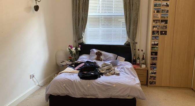 Loving student dogsitter, dog sitter in Exeter