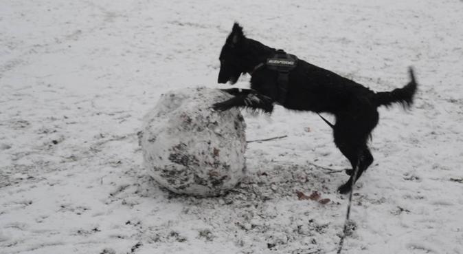 Kärleksfull passning med fokus på hundens behov, hundvakt nära MALMÖ