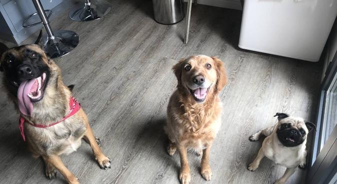 Bienvenu chez vous 🐾, dog sitter à Bordeaux, France