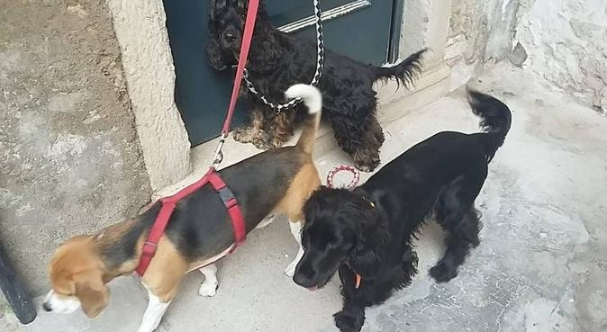 Giochi, coccole e lunghe passeggiate!, dog sitter a Venezia