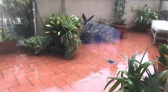 Canguro para tu peludo/a en Sabadell - Can llong, canguro en sabadell