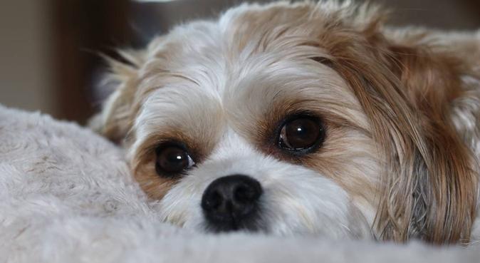 The Dogchester, dog sitter in Borehamwood