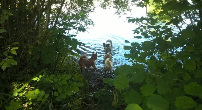 Fetch'em Dog Sitters, dog sitter in Leatherhead